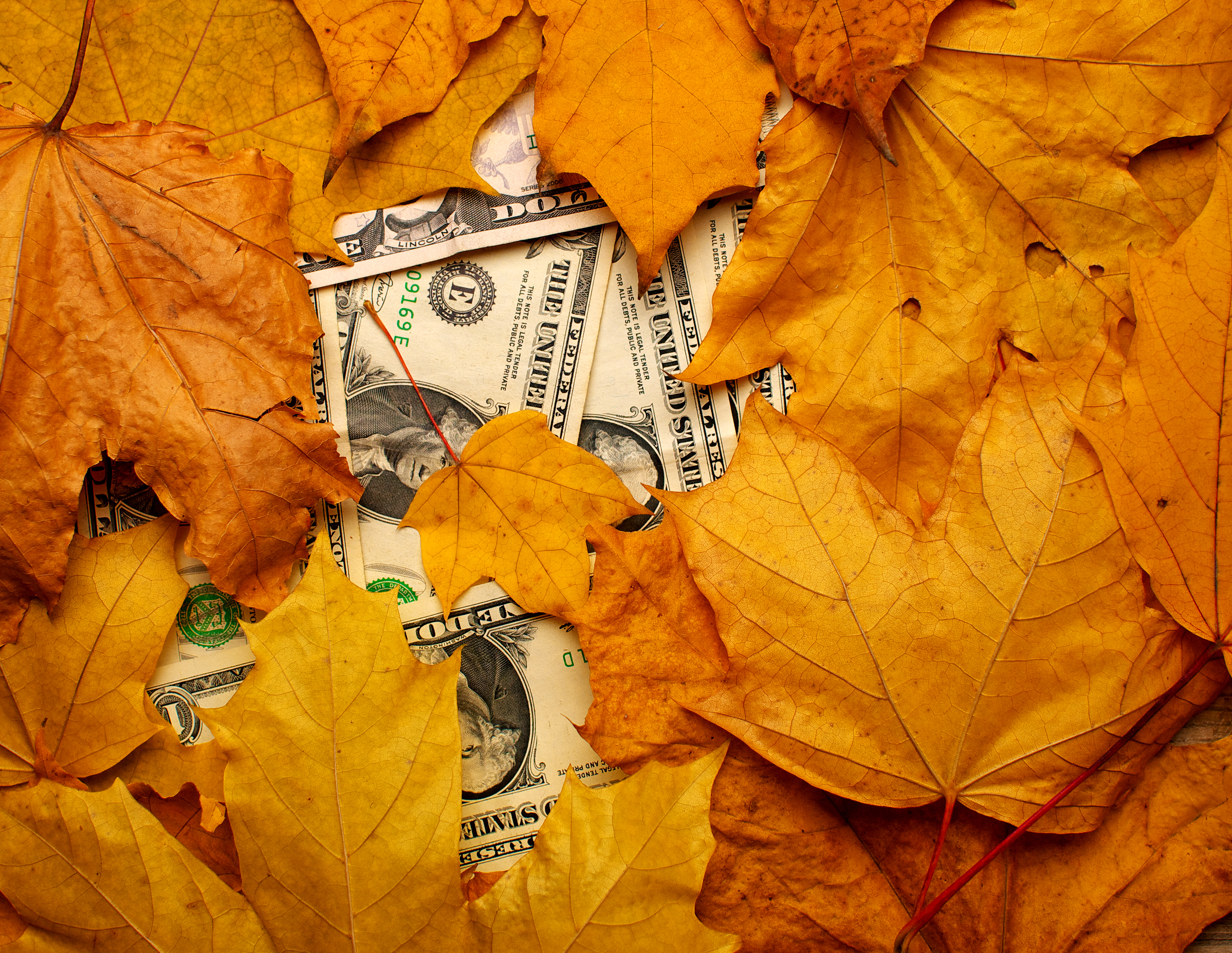Money in Fall Leaves